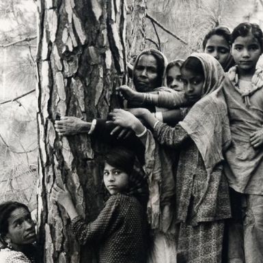 How the Tree-Hugging Movement Got Started in a Small Indian Village