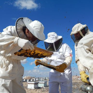 The Data Engineer on a Mission to Save Tunisia's Bees
