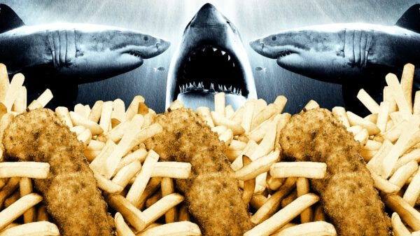 Are Fish and Chips Killing Great White Sharks?
